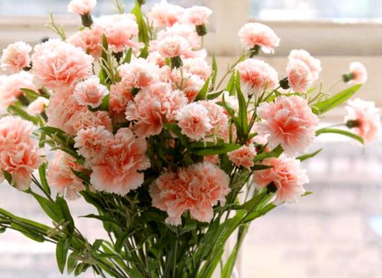 漂亮的康乃馨 - 蕙质兰心 - 蕙质兰心